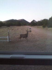 Deer trouble