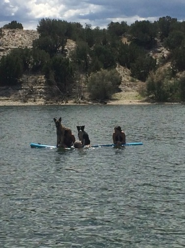 Dogs & Girls, paddle boarding